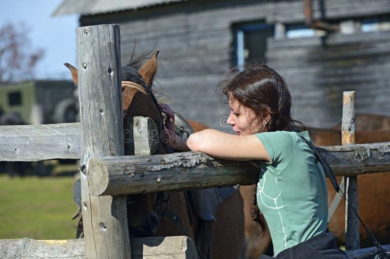 Cavallo carpatico immagine stock