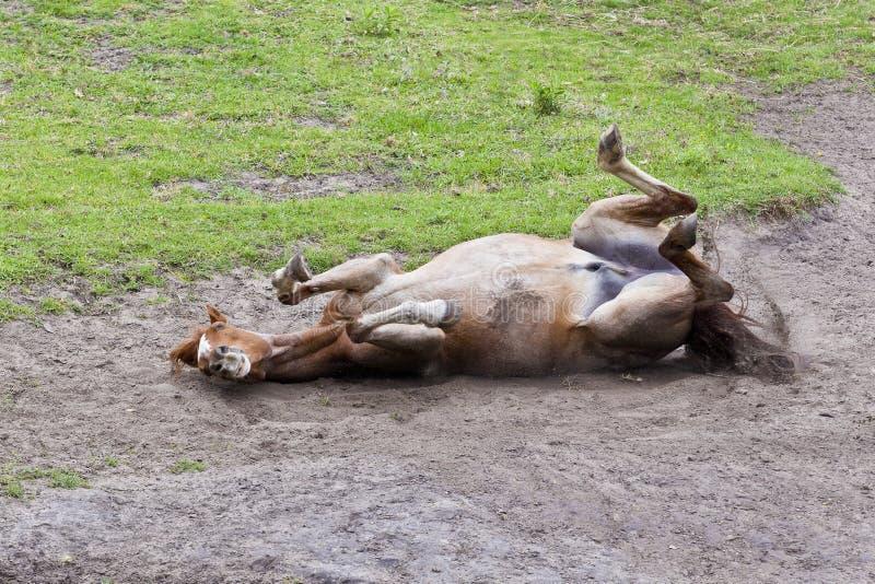 Cavallo che arriva a fiumi sabbia fotografia stock