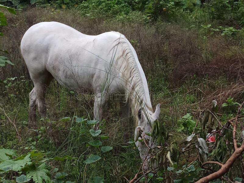 Cavallo che cammina nel vicolo fotografia stock