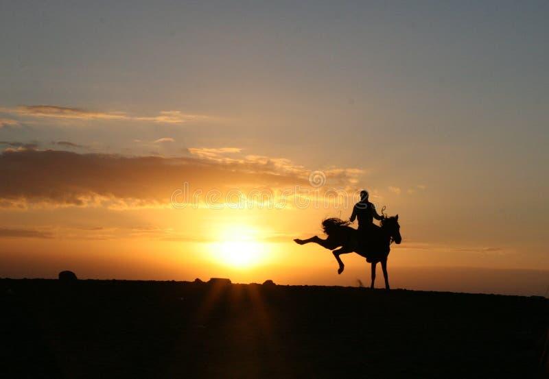 Cavallo che dà dei calci l'alba immagini stock libere da diritti