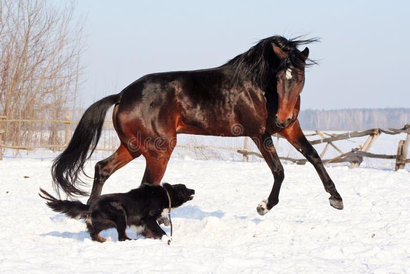 Cavallo che gioca con un cane fotografia stock libera da diritti