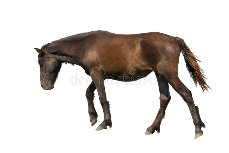 cavallo che va contro il vento immagini stock libere da diritti