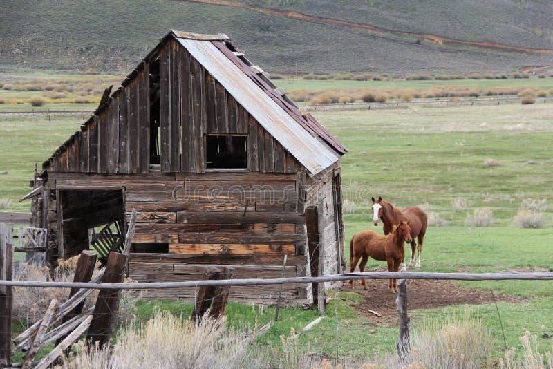 Cavallo con il bambino accanto al granaio di legno immagine stock