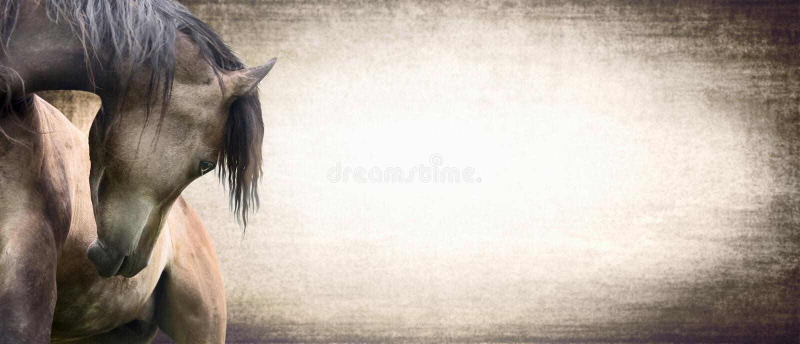 Cavallo con il collo meravigliosamente curvo sul fondo di struttura, insegna illustrazione vettoriale