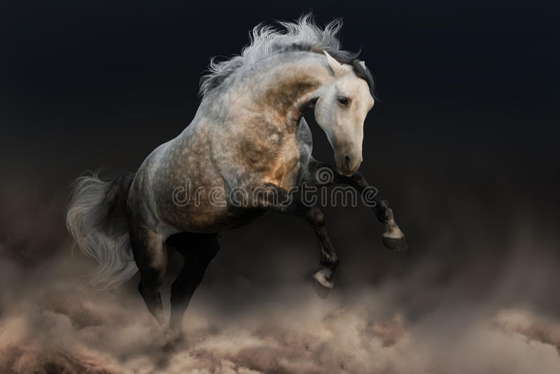 Cavallo con la criniera lunga immagini stock libere da diritti