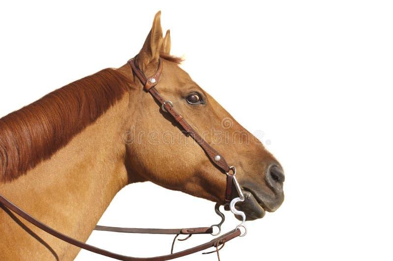 Cavallo Con Lo Sguardo Eyed Selvaggio Fotografia Stock