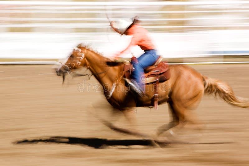 Cavallo Corrente Immagine Stock Libera da Diritti