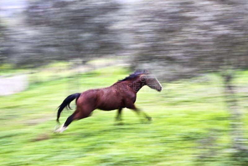 Cavallo corrente fotografia stock