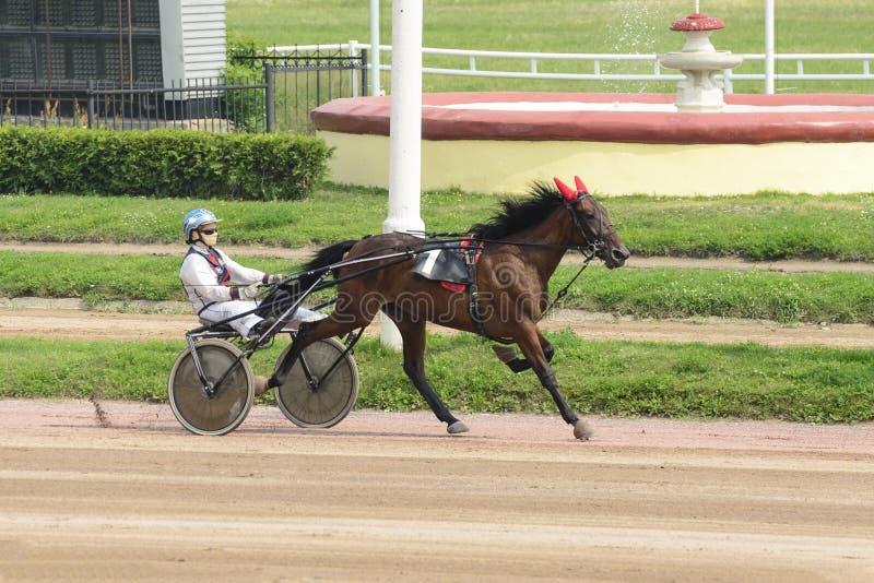 Cavallo corrente con il cavaliere sull'ippodromo immagine stock libera da diritti