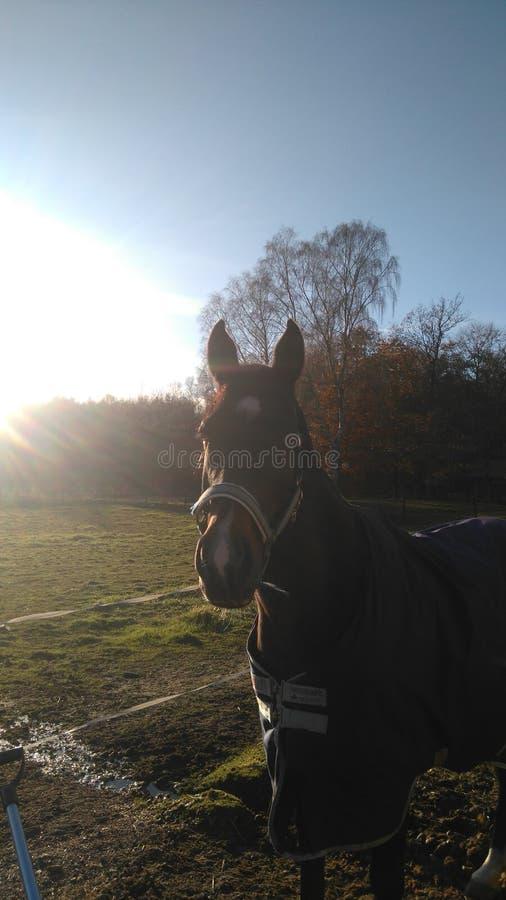 Cavallo curioso immagine stock libera da diritti