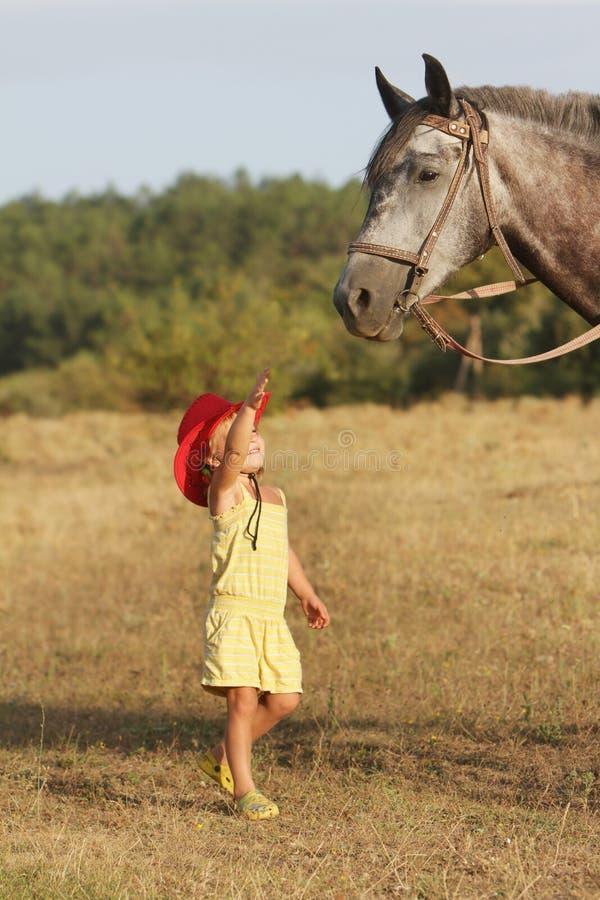 Cavallo d'alimentazione della ragazza su sfondo naturale fotografia stock