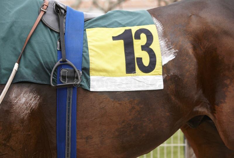 Cavallo da corsa con il numero tredici fotografia stock