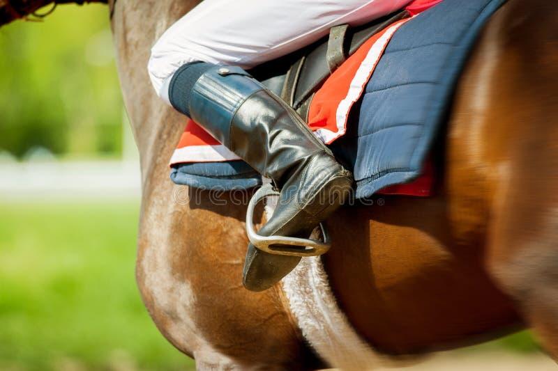 Cavallo da corsa corrente del purosangue con il jokey su in molla soleggiata fotografia stock
