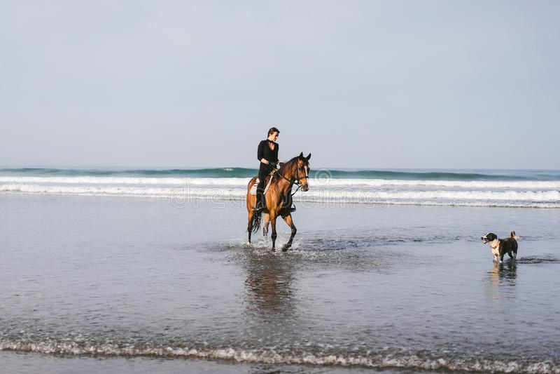 cavallo da equitazione della giovane donna e del cane sulla spiaggia immagine stock