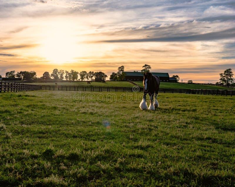 Cavallo da tiro su un'azienda agricola del cavallo del Kentucky fotografia stock libera da diritti