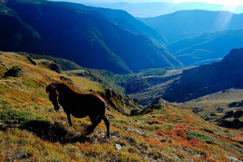 Cavallo del Balcani fotografia stock libera da diritti