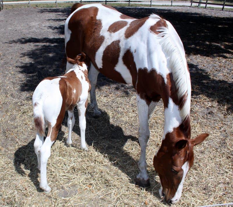 Cavallo del bambino e della madre immagini stock