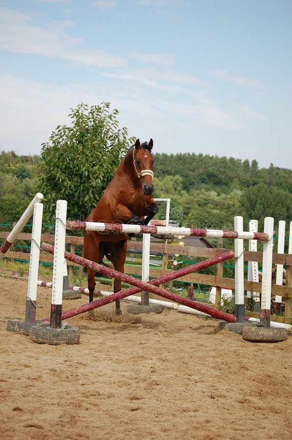 Cavallo del Brown immagine stock