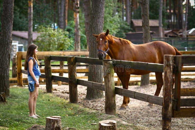 Cavallo del nero del colpo della ragazza dell'adolescente con la fine della capezza sulla foto di estate fotografie stock