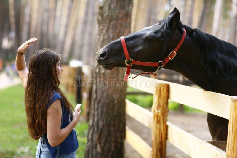 Cavallo del nero del colpo della ragazza dell'adolescente con la fine della capezza sulla foto di estate fotografie stock libere da diritti