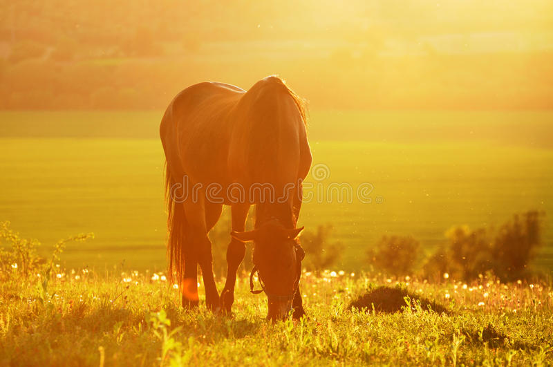 Download Cavallo della foto backlit immagine stock. Immagine di riding - 55359239