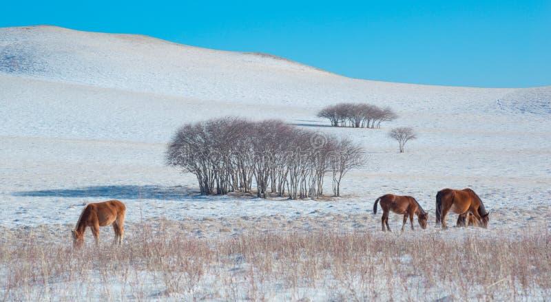 Cavallo 2 della prateria fotografia stock libera da diritti