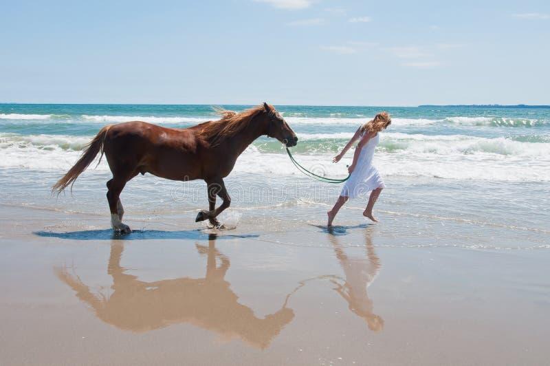 Cavallo della spiaggia immagine stock libera da diritti