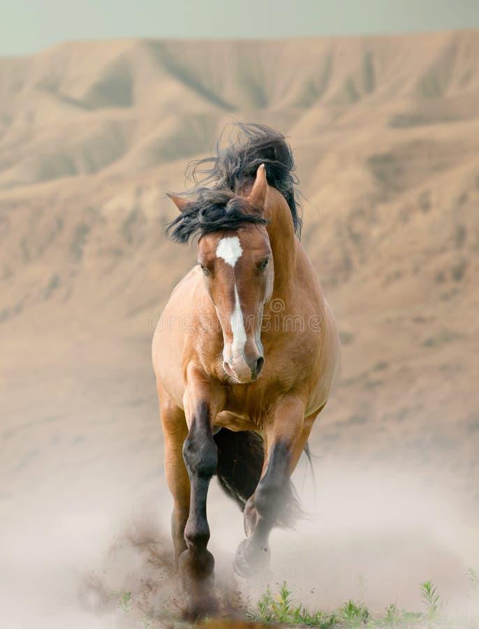 Cavallo in deserto immagine stock