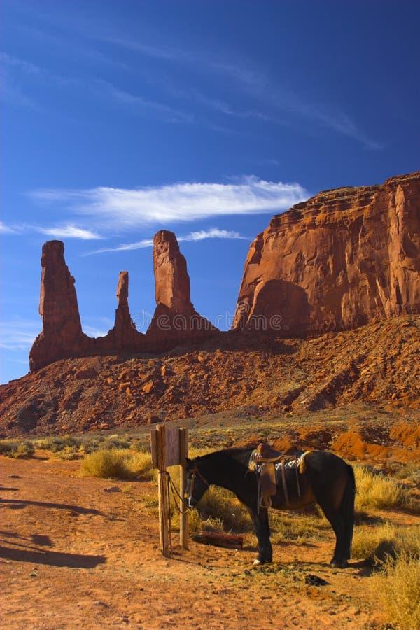 Cavallo in deserto rosso immagine stock