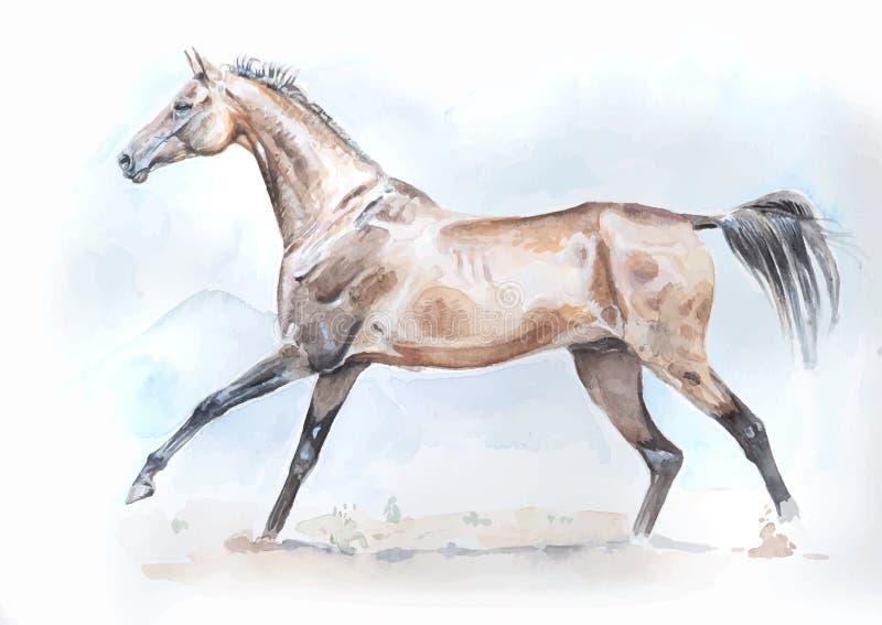Cavallo di Akhal-teke nella pittura dell'acquerello di moto nel formato di vettore royalty illustrazione gratis
