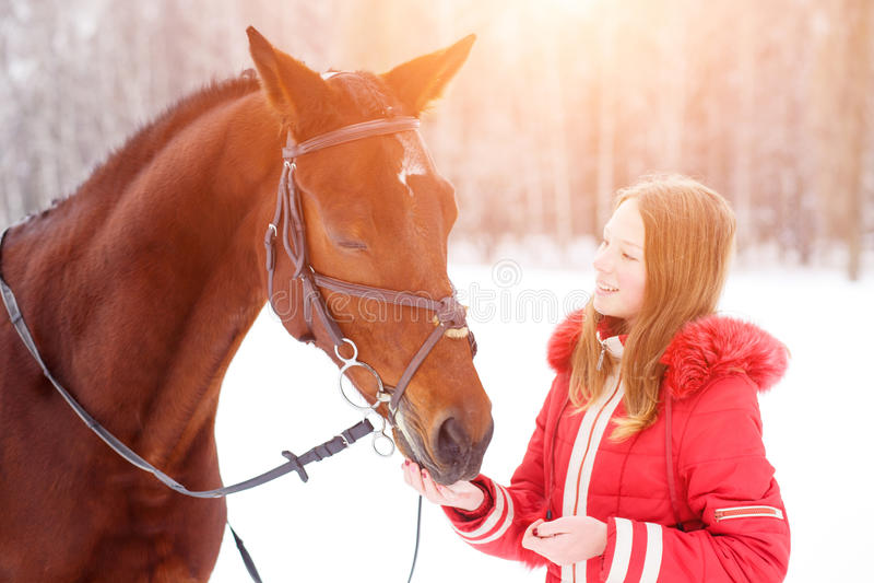 Cavallo di baia d'alimentazione dell'adolescente sul campo di inverno fotografie stock
