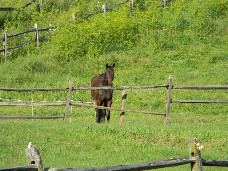 Cavallo di Brown nel campo impregnato di gas fotografia stock