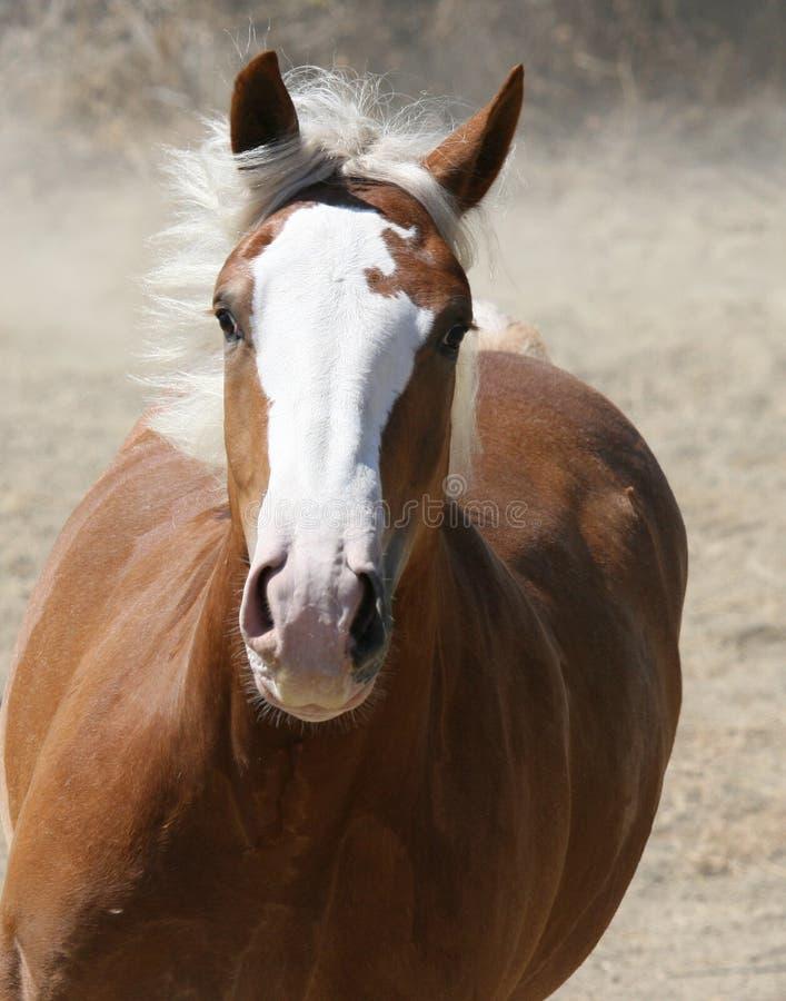 Cavallo di carico fotografia stock libera da diritti