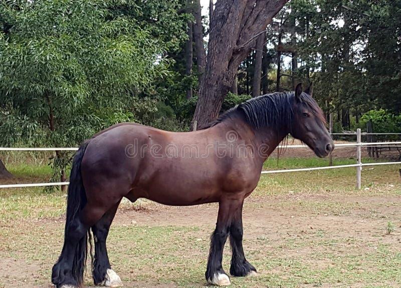 Cavallo di carretto immagini stock libere da diritti
