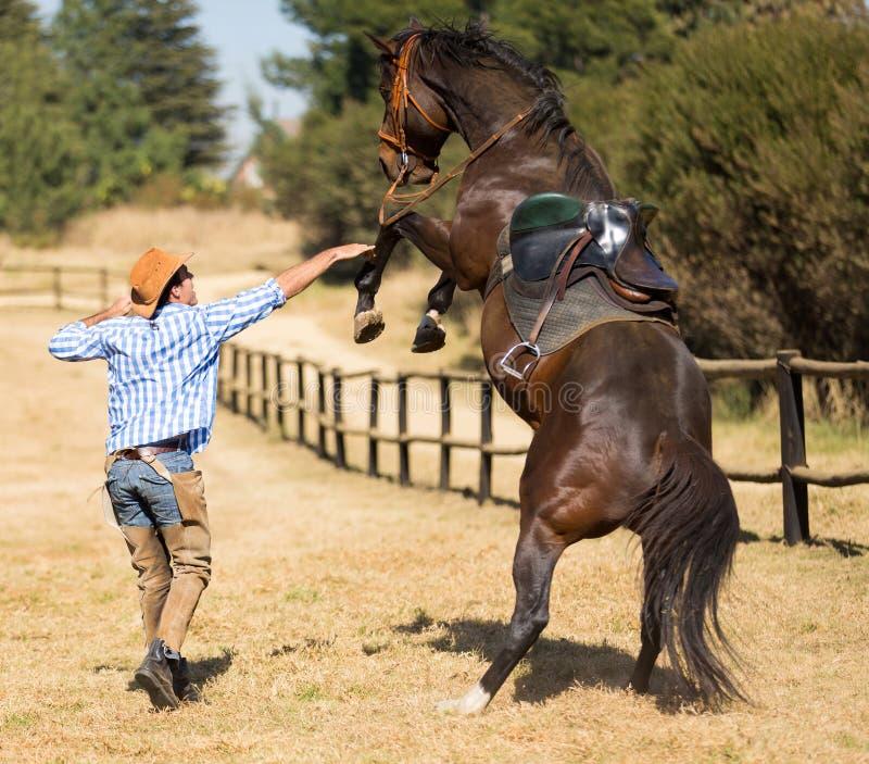 Cavallo di controllo del cowboy fotografia stock libera da diritti