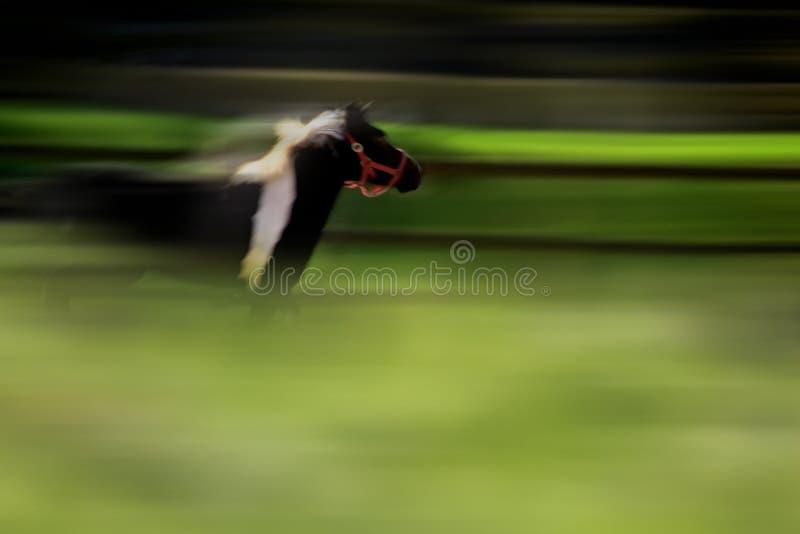 Cavallo di corsa fotografie stock