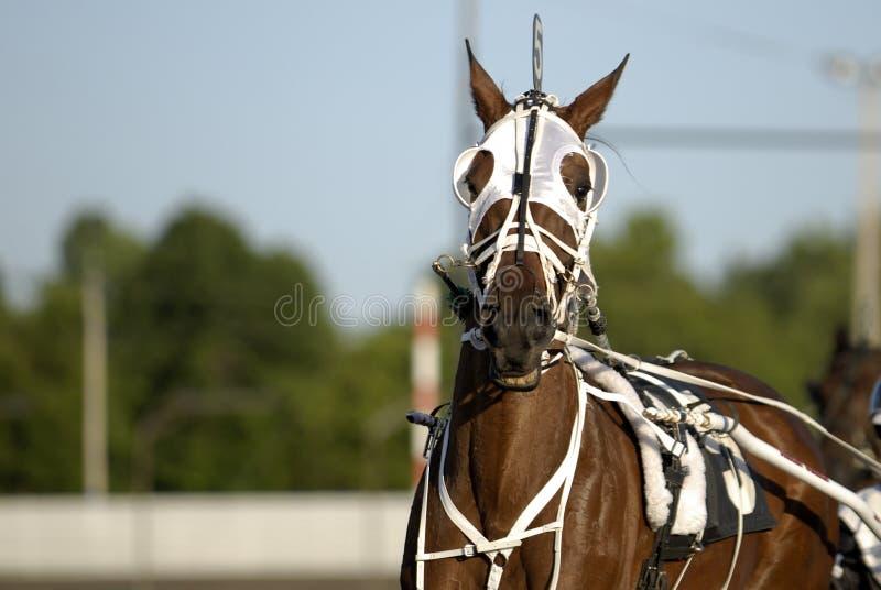 Cavallo di corsa del cablaggio fotografia stock libera da diritti