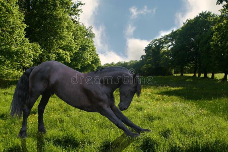 Cavallo di curvatura fotografia stock