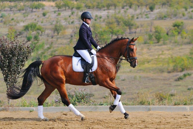 Cavallo di dressage della baia di guida della ragazza fotografia stock libera da diritti