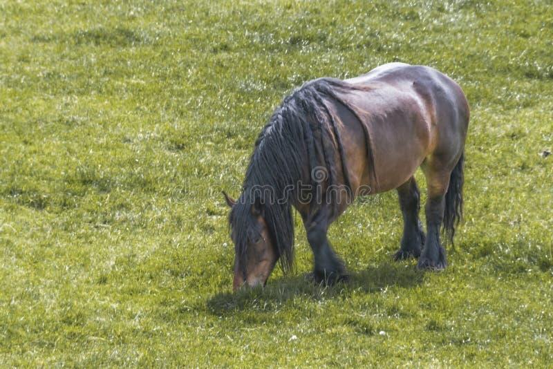 Immagini di riserva di cavallo di aratro la sovranit di for Attrezzatura agricola usata lazio