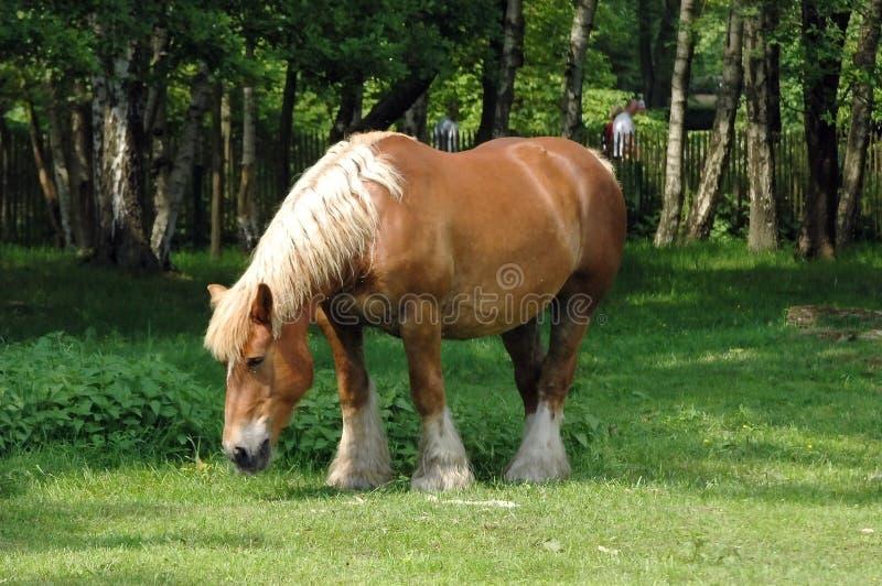 Download Cavallo di funzionamento fotografia stock. Immagine di addomesticato - 204972
