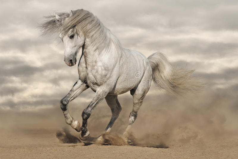 Cavallo di gray d'argento in deserto immagini stock