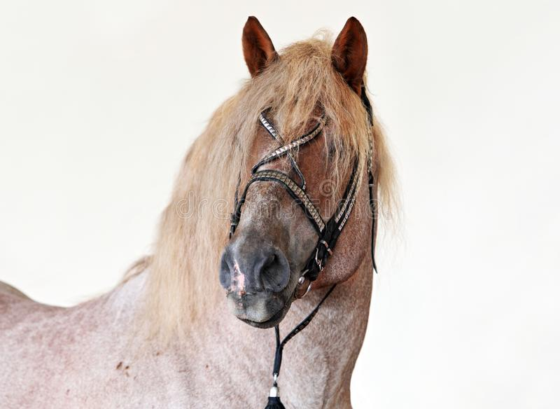 Cavallo di Grey Percheron alla fiera paesana royalty illustrazione gratis