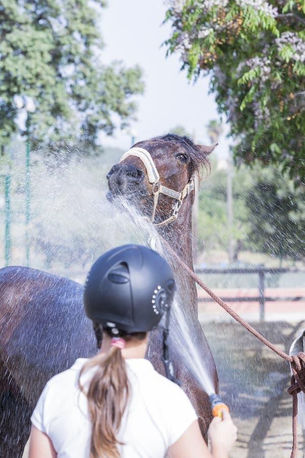 Cavallo di rinfresco della ragazza immagini stock libere da diritti