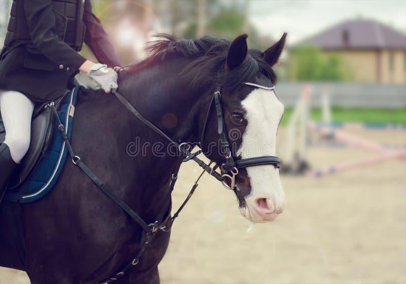Download Cavallo di salto immagine stock. Immagine di cavallo - 56891141