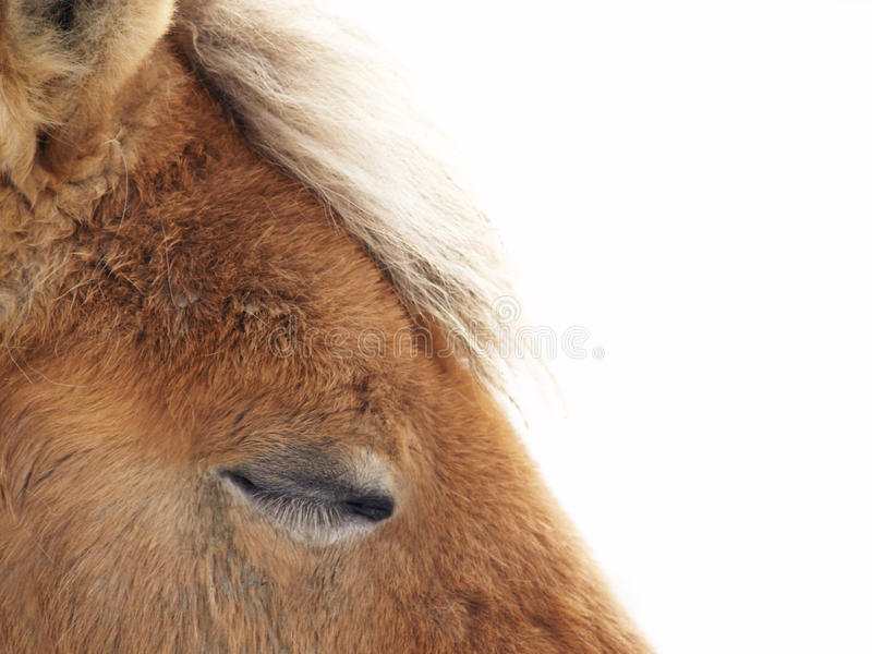 Cavallo di sonno (31) fotografia stock