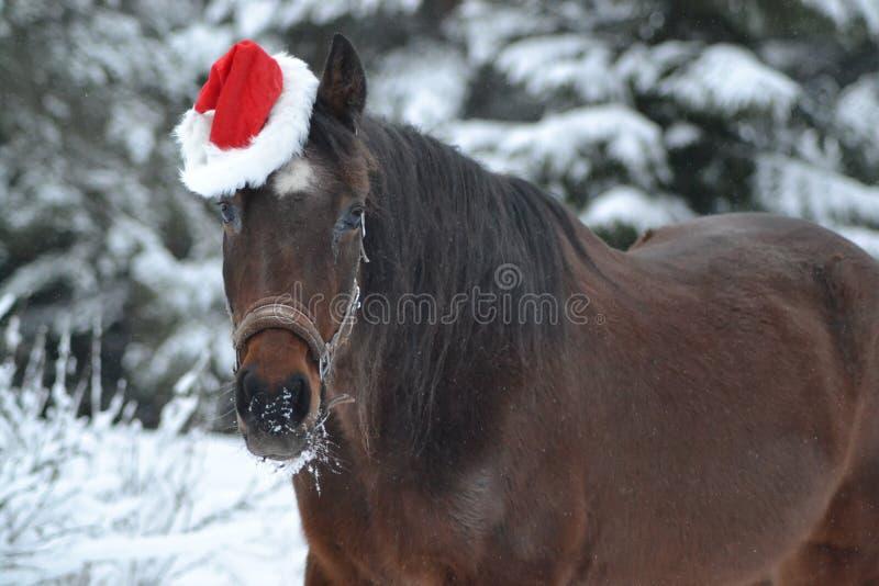 Cavallo di tema di Natale fotografia stock libera da diritti