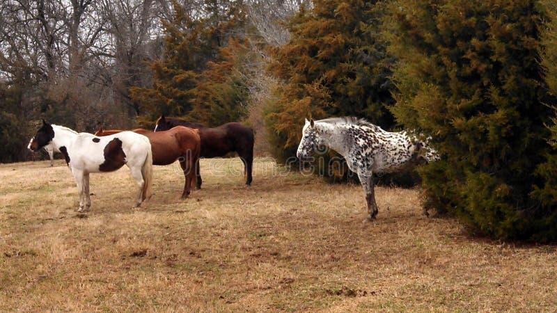 Cavallo di un colore differente fotografia stock libera da diritti