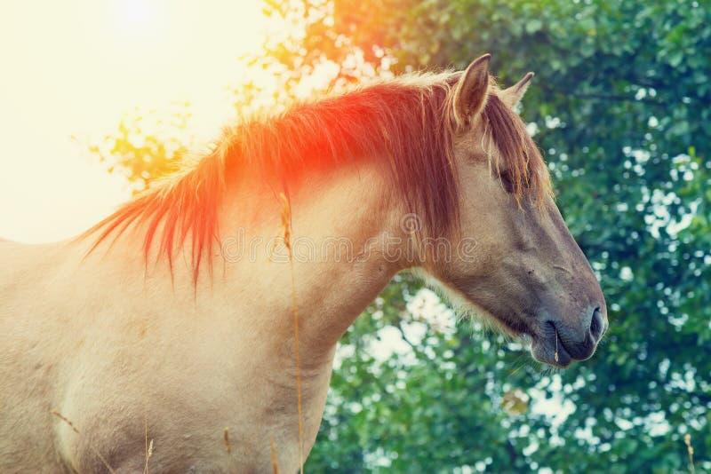 Cavallo di Wilde fotografie stock libere da diritti