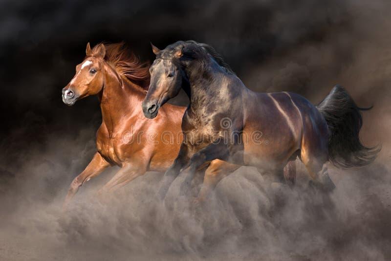 Cavallo due nella tempesta di deserto fotografia stock libera da diritti